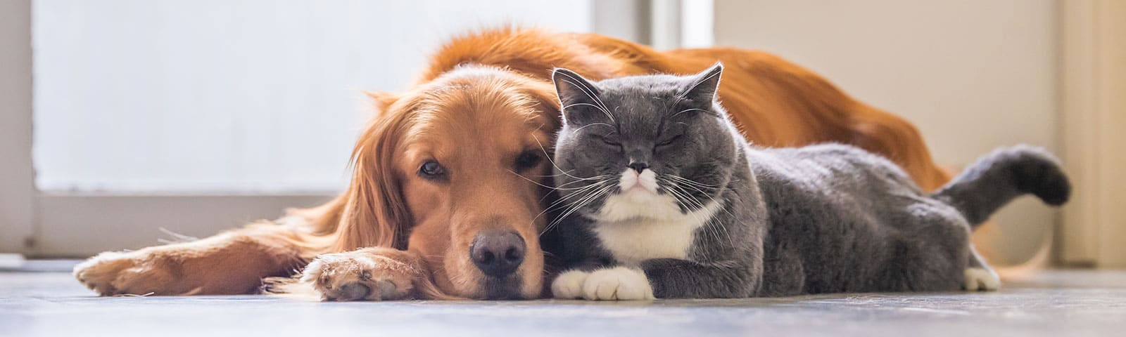 Dog and Cat laying down together