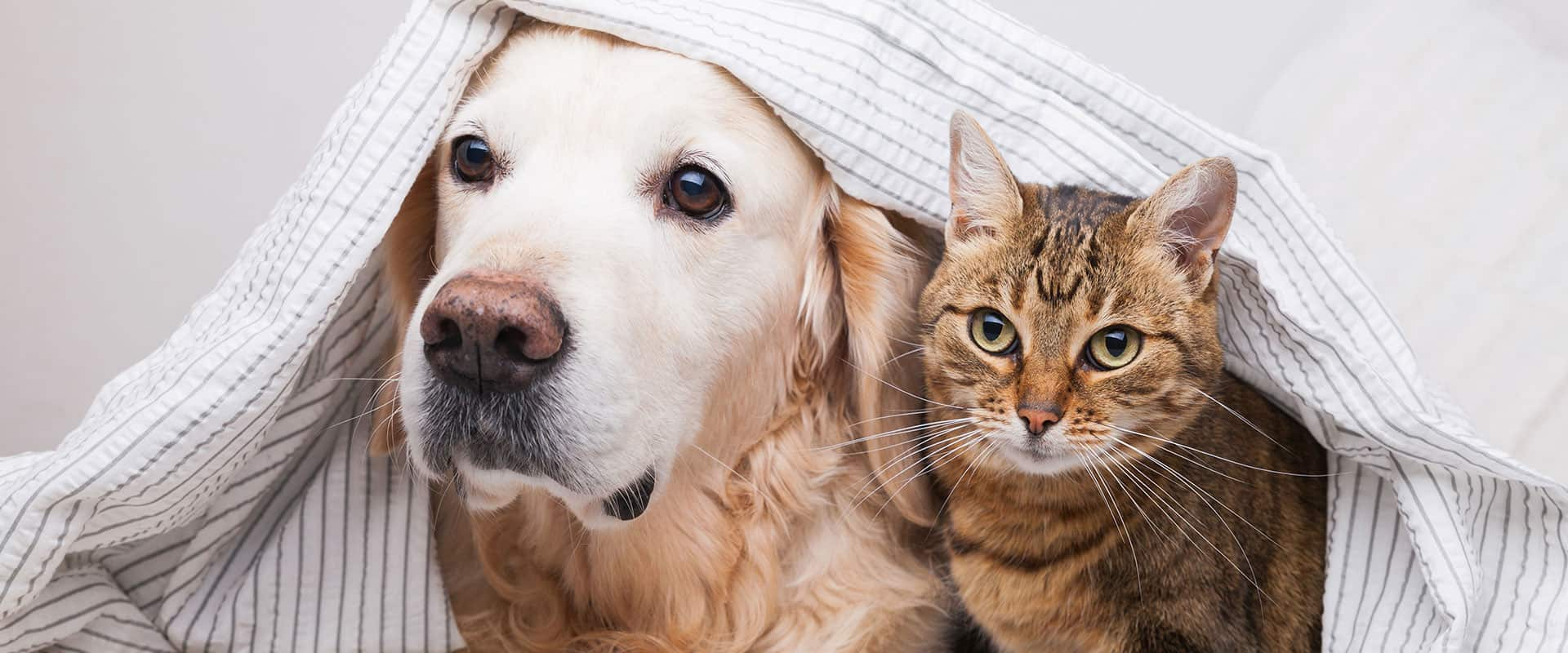 dog and cat looking out from under sheet